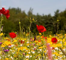 Meadow Flowers by Michael Hadfield