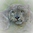 Snow Leopard by ©FoxfireGallery / FloorOne Photography
