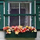 window box by Lynne Prestebak