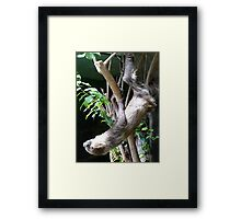 Hangin' Around Framed Print