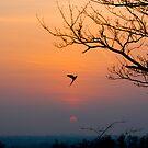 Parrot over Richmond by ally mcerlaine