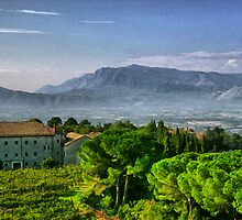 Vineyard in Monte Cassino by Roland Pozo