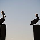 Two Brown Pelicans by oldgoatsphoto