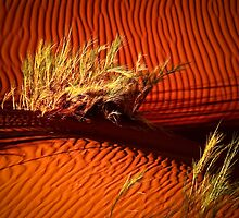 Sand ripples of namibian desert by Saka