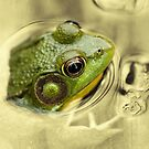 time for frog by blacqbook