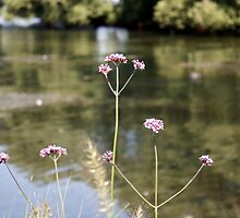 Flowers at the Lake by PPPhotoArt