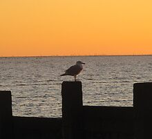 Seagull Sunset by Pamela Jayne Smith