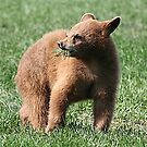 Black Bear Cub by Teresa Zieba
