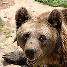 bear by wendywoo1972
