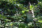 Elusive Yard Gnome by Ainsley Kellar Creations
