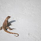 The Lone Gecko by Nick Carter