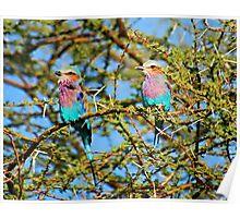 Samburu Birds Poster