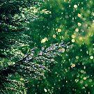 Sunshowers by James McKenzie