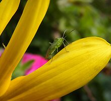 Leaf Beetle by AnnDixon