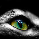 Cat Eye by Raquel Perryman