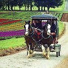 Horses and Carriage - Tulip Farm, Silvan, Victoria by Bev Pascoe