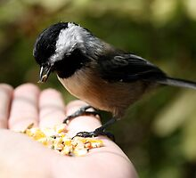 Small Seeker of Sunflower Seeds by Wolf Read