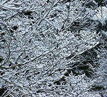 Winter Lace by Linda Costello Hinchey