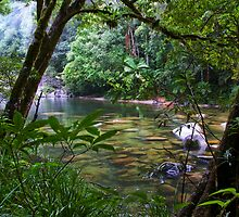 Lost World - Far North Queensland by Karen Willshaw