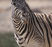 Etosha National Park by Steve Bullock