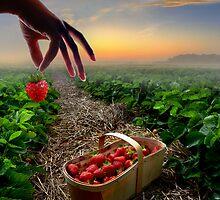 Sunset Harvest by Igor Zenin