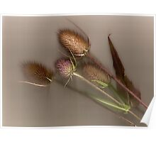 Purple Thistle Passes On Poster