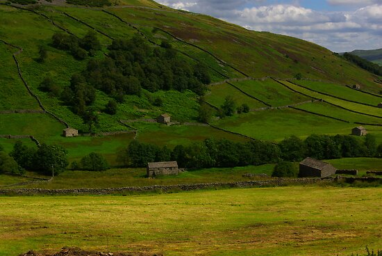 Hillside Barns - Swaledale,North Yorks. by Trevor Kersley
