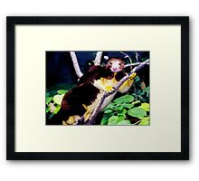 Why are you Disturbing Me? Framed Print