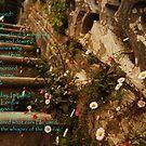 Steps-Monserrate Palace by Wayne Cook