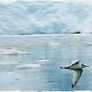 Gull and Glacier by Rene Hales