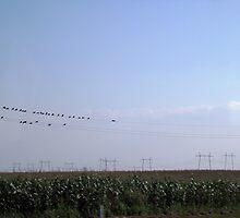 BIRDS ON WIRE by Rada