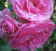 The More the Merrier Roses by MarianBendeth