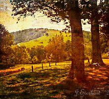 A Walk Around the Monticello by Julie Everhart