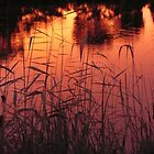 Reeds by Judith Cahill