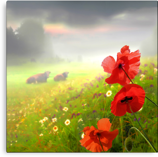 Red Poppies by Igor Zenin