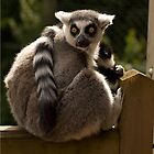 Billy the Lemur by Jill Tisbury