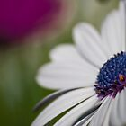 Flowers  by Calelli