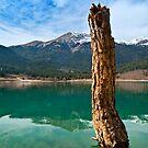 Dead tree by Kostas Pavlis