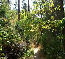 Ashland trail by Jimmy Joe