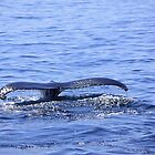 Humpback Tail by jenndes