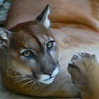 A Cougar Takes Her Break by Chuck Zacharias