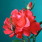 Rose on turquoise by Anna Goodchild
