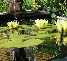 Yellow lillypads by DPKDesign