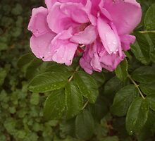 Flowers by Elizabeth McMullen