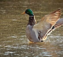 Splash! by celesteodono