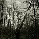 Deadwood by makbet666