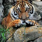 Tiger, Tiger Burning Bright by Dennis Stewart