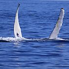 Humpback Flight by jenndes