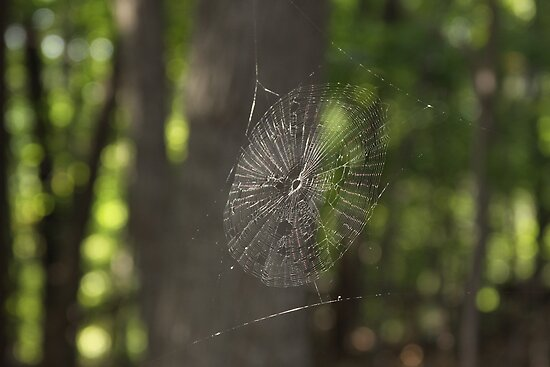 Web in Hanging Rock Park by Lisawv