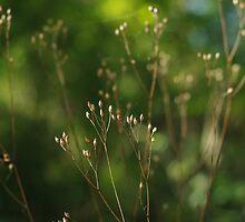 Buds - Redhill Creek by John McKnight
